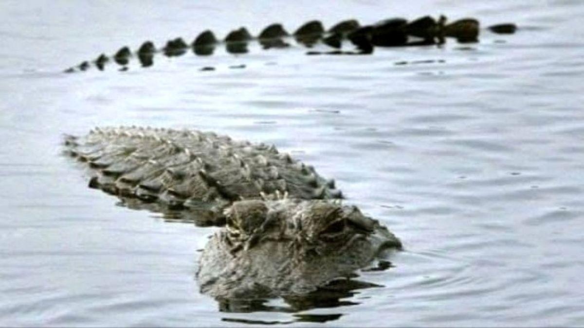 تمساح دریاچه چیتگر بالاخره پیدا شد + عکس
